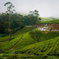 Sri_Lanka_zdjecia_plantacje_herbaty_Nuwara_Eliya, DSC_3946