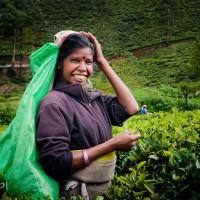 Sri_Lanka_zdjecia_plantacje_herbaty_Nuwara_Eliya, DSC_3959