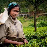 Sri_Lanka_zdjecia_plantacje_herbaty_Nuwara_Eliya, DSC_3963