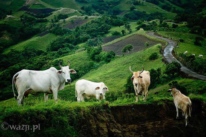 Filipiny_wyspy_Batanes, DSC_6961
