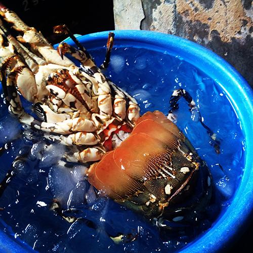 Filipiny_seafood_homar, IMG_2224
