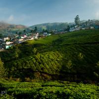 Indie_Kerala_Munnar_plantacje_herbaty, DSC_3508