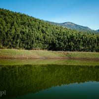 Indie_Kerala_Munnar_plantacje_herbaty, DSC_3593