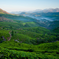 Indie_Kerala_Munnar_plantacje_herbaty, DSC_4175
