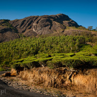 Indie_Kerala_Munnar_plantacje_herbaty, DSC_4261