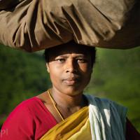 Indie_Kerala_Munnar_plantacje_herbaty_ludzie, DSC_4323
