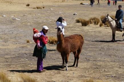 Polujac na turystow z dzieckiem i z lama