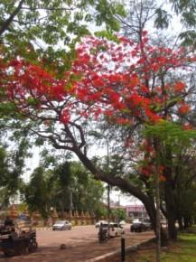 Vientiane 4