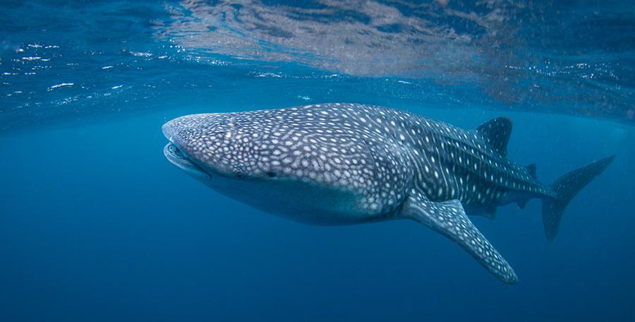 [wywiad] Krzysztof Sieniawski o fotografii podwodnej