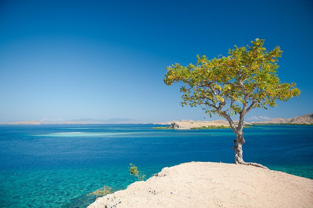 Widoczek z drzewkiem. Z górki na wyspie Messah.