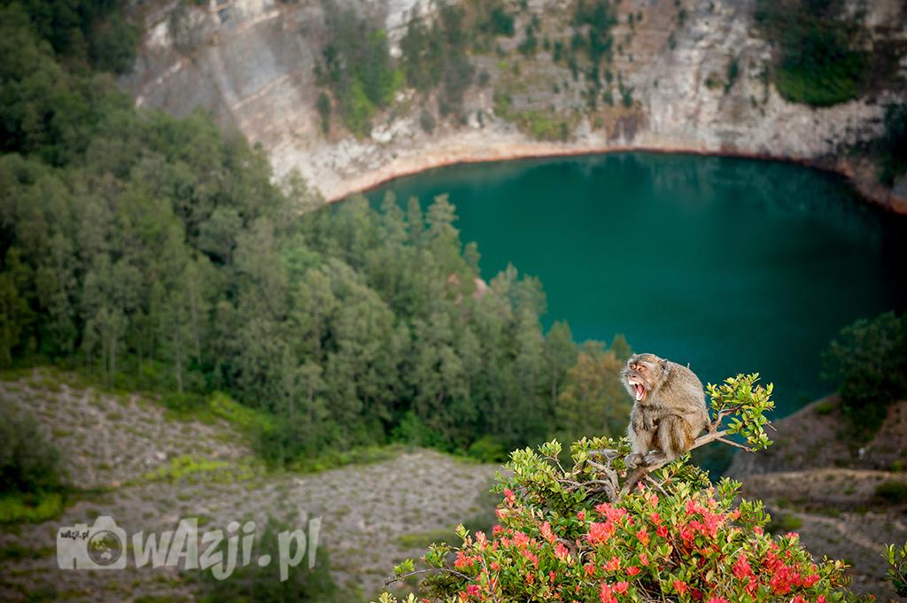 Indonezja, Flores. Drugie z kolorowych jezior. Małpa ewidentnie ma dosyć pozowania do zdjęć. (sierpień 2015)