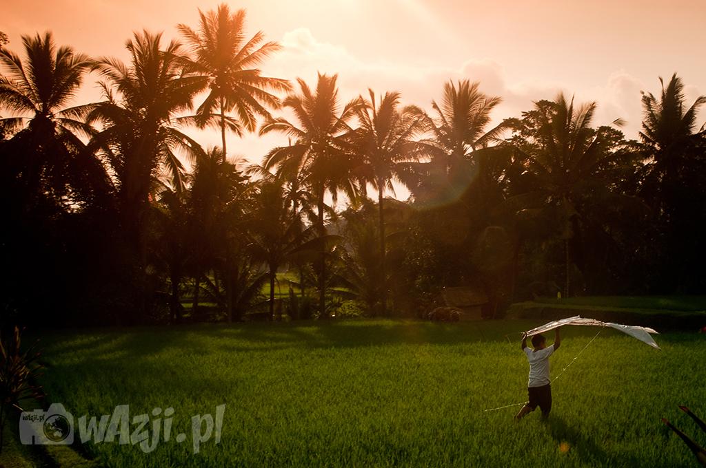Pola ryżowe w okolicy Ubud.
