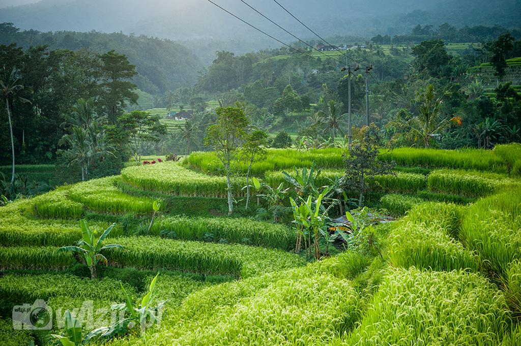 Pola ryżowe w Jatiluwih