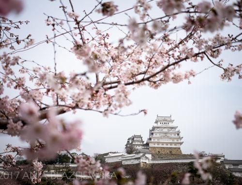 W poszukiwaniu japońskiej wiosny