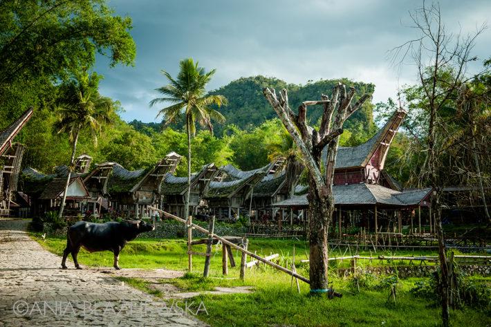 tana_toraja_sulawesi_indonezja_indonesia