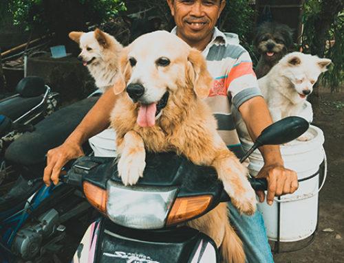 Balijczycy: Ketut Lelut Celelut i jego 25 psów